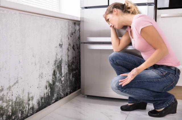 mold near refrigerator